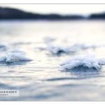 FrostFlower_MG_7968