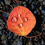 WaterDrop on Autumn Leaf