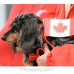 dogs_canada