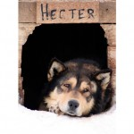 dogs_hecter