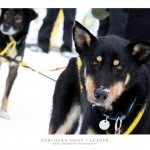 dogs_leader