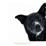 dogs_ruff