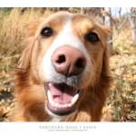 dogs_sadie