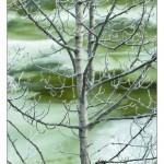 Winter Trees ll