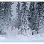 icecold 1st Island_MG_7968
