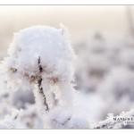 snowball_MG_9299sm